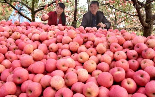 """2019年""""最出风头""""的水果,上半年贵得离谱,下半年白菜价愁卖"""