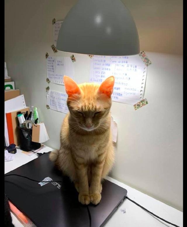 猫咪头顶着台灯脚踩着电脑,一副很神秘的表情,在和喵星球联络?