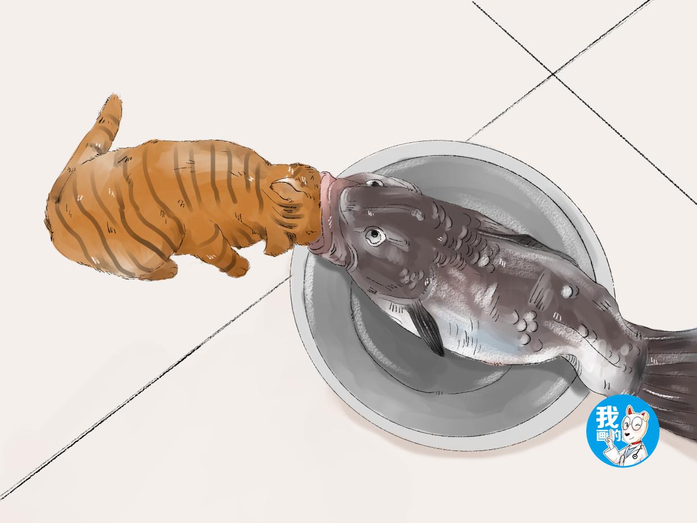 原创 女子买了条鱼放厨房,半夜听到一阵躁动,出来看后顿时没了胃口