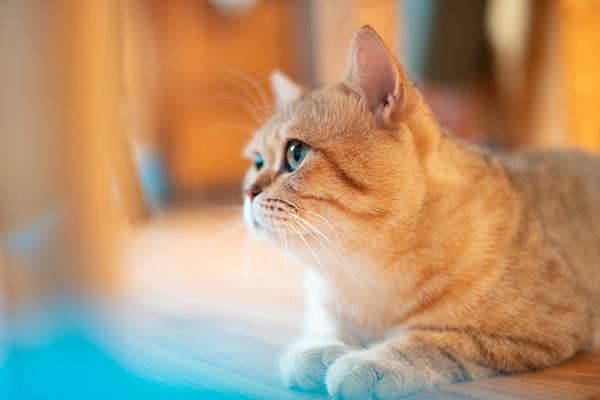 原创 狗需要天天遛,猫咪一直呆在室内就没事吗?