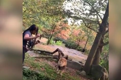 """想什么呢?美国女子翻进动物园狮笼""""跳舞""""警方果断逮捕"""