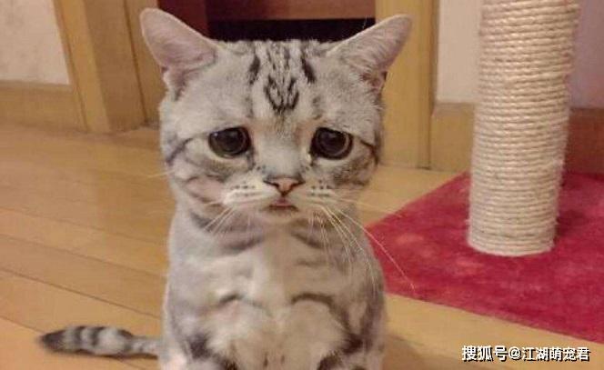 猫咪做错事 该怎么惩罚图片