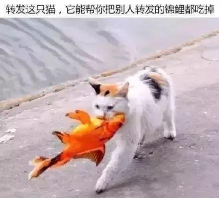吃了这条锦鲤