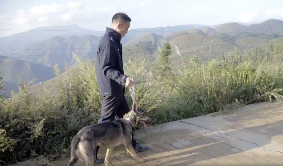 原创 警局淘汰了一只不合格的警犬,结果它换了个工作以后……