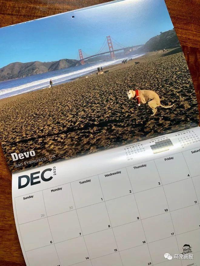 2020年拉粑粑的狗狗主题日历又来啦