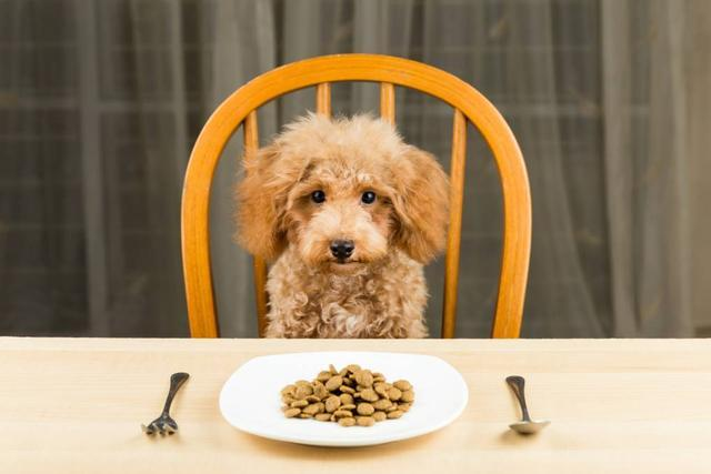 狗狗挑食不吃狗粮怎么办?这5招,帮你轻松解决
