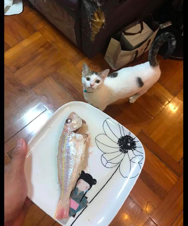 主人给猫蒸了条鱼,不出一分钟吃的就剩鱼骨架了,舌头功夫真好呀