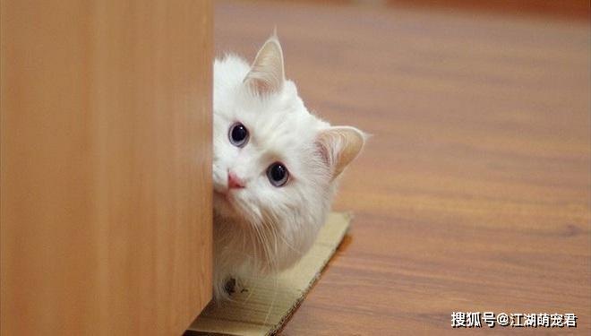 猫咪做错事图片