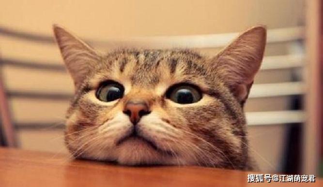 猫咪做错事怎么惩罚图片