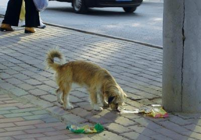 大部分的狗狗,都害怕这6样东西,不要再吓唬它了