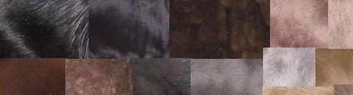 拔光斑马所有的毛,它究竟是白马还是黑马?