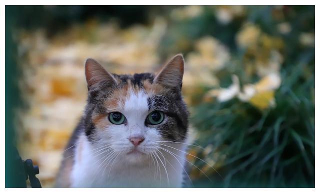 """并不是所有""""猫咪""""都认主,有这些行为的猫,并不喜欢你"""