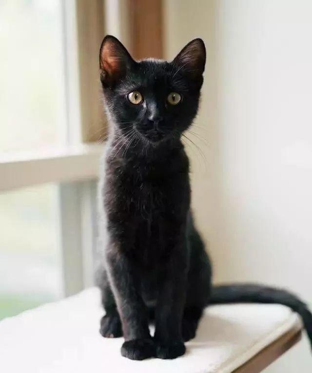 害羞流浪猫每天来吃饭,最后索性走进大门求收养