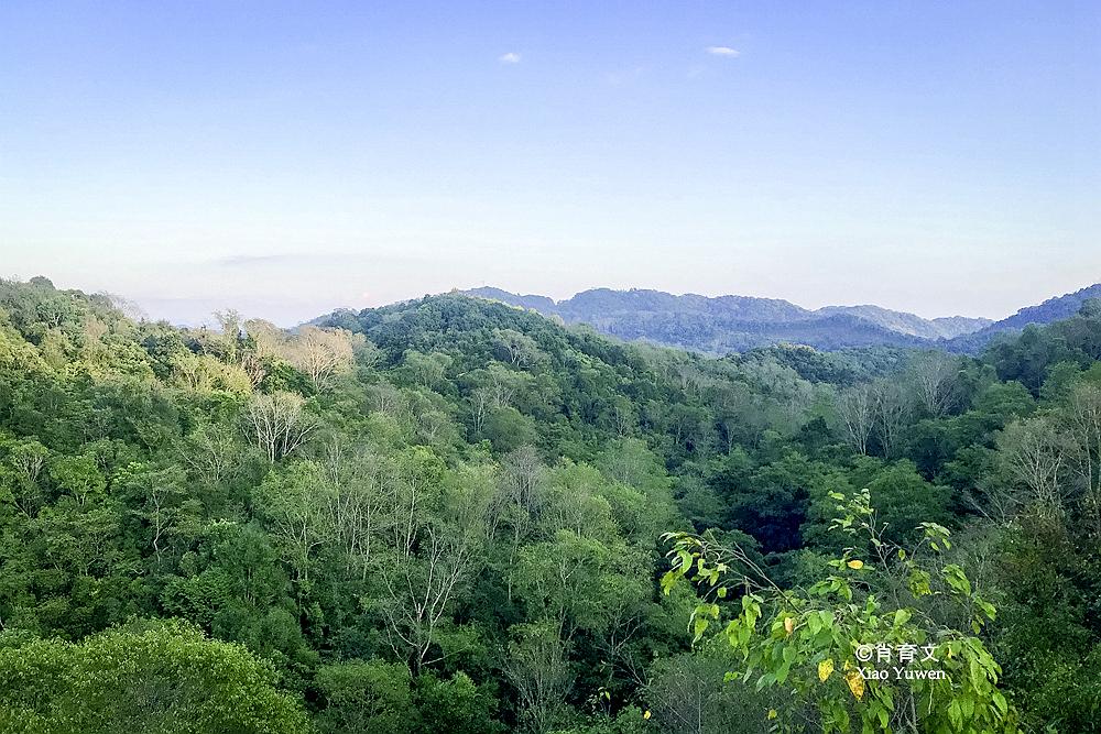在云南普洱有萌萌的小熊猫,还有神秘的绿三角,是最耀眼的珍珠_森林