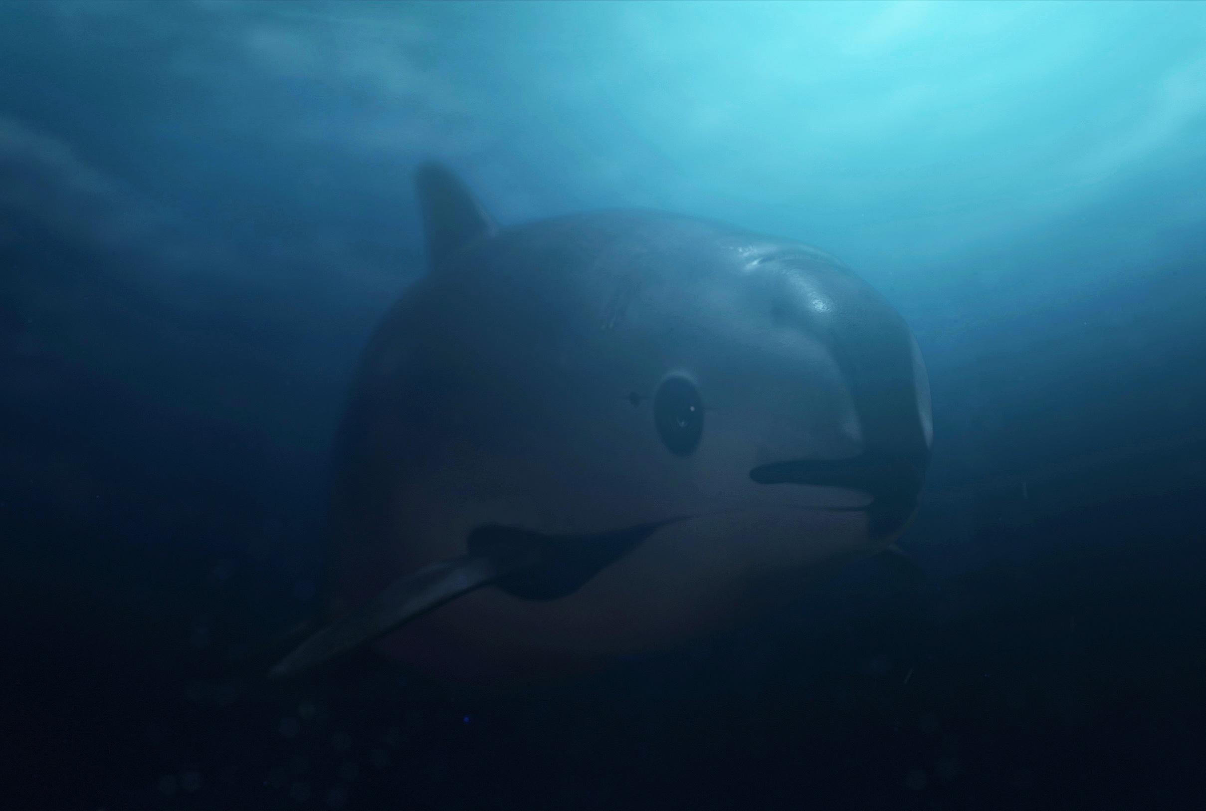 """原创 偶像做环保最棒的打开方式,莱昂纳多为拯救""""瓦基塔""""涉险拍片"""