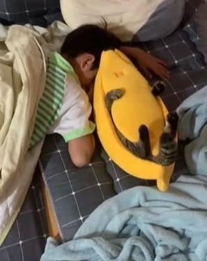 孩子床上有一个长脚的香蕉,打开一看是猫在里面睡觉,猫:有啥事