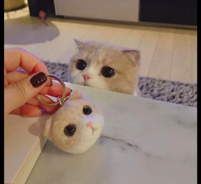 主人做了个和猫一模一样的羊毛毡,它看后一脸懵:我的头被割了?