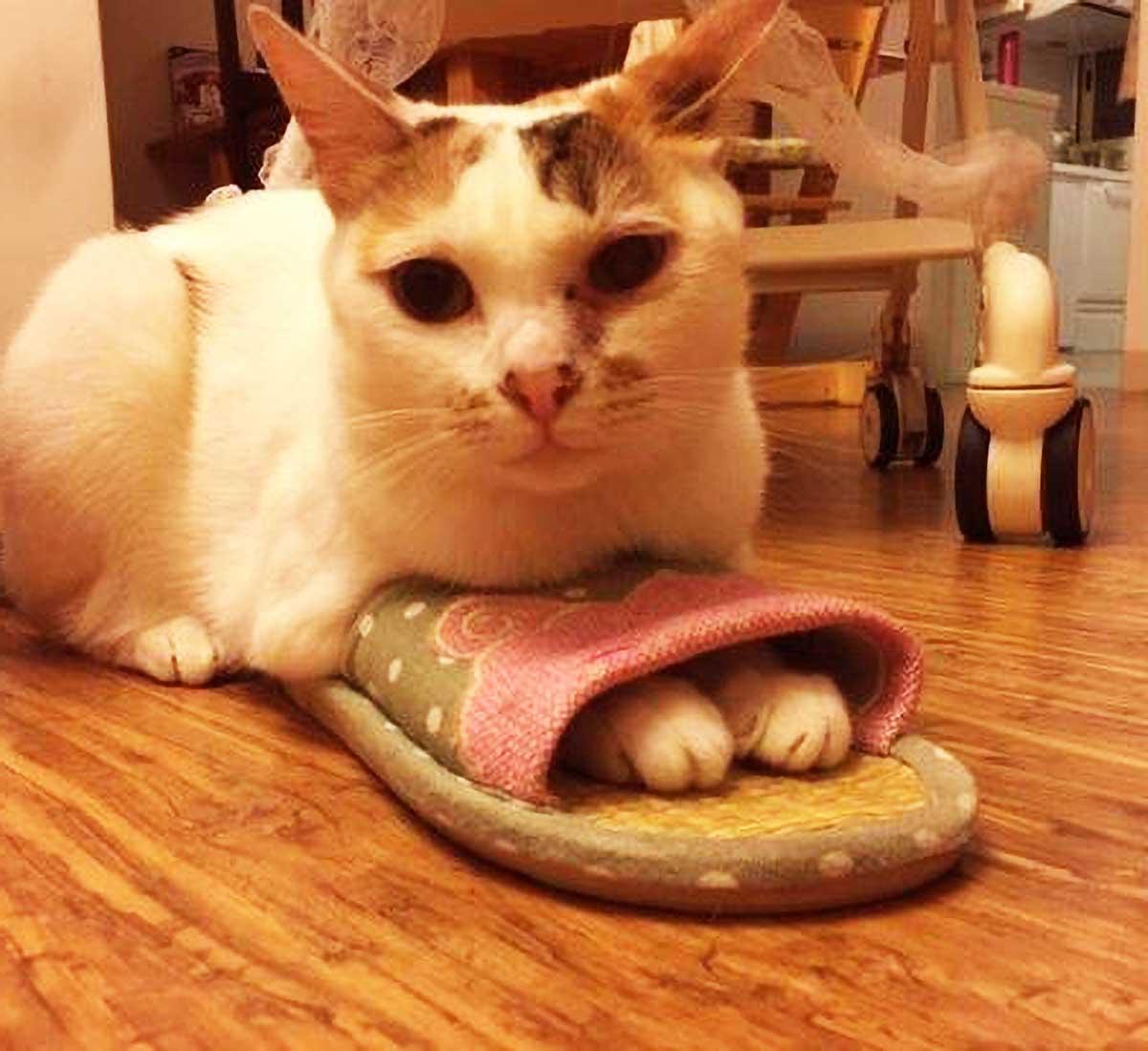 """原创 每当吃饭时,猫咪就喜欢用屁股怼人脸,铲屎官的""""回应""""让人佩服"""