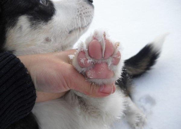 原创 冬天狗狗爱生病?十个过冬小常识,了解这些就够了!