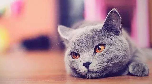 黑白猫爱吐粉红小舌头,凭借吃惊的表情脸收服25万粉!