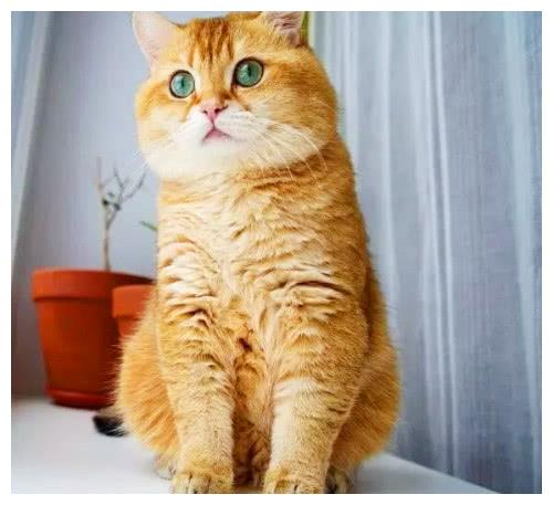 养猫的铲屎官切记,千万不要做这三件事情,否则它离你越来越远