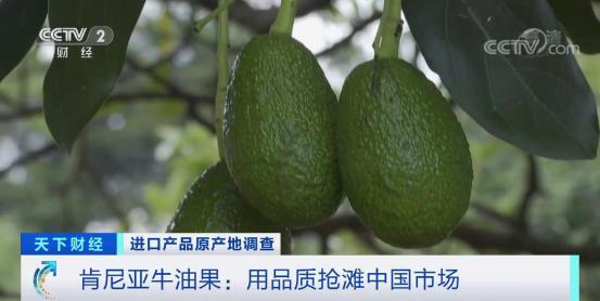 """200公斤肯尼亚冷冻牛油果已到中国!""""漂洋过海""""的新产品,你想尝尝吗?_出口"""