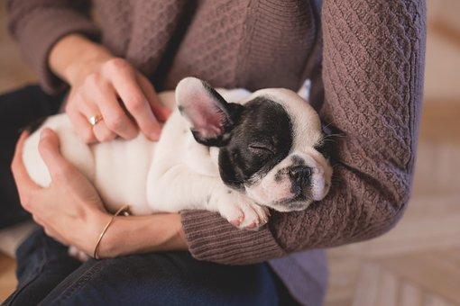宠物肠胃宝都有什么功能呢?狗狗吃宠物肠胃宝真的很有效吗?