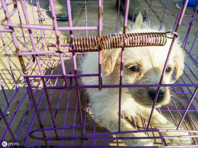 这10种狗不能带回家,你以为是捡到宝,其实是麻烦上身
