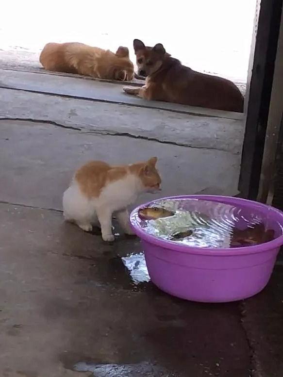女子看到猫咪要偷鱼,正要上前阻止,却默默掏出了手机