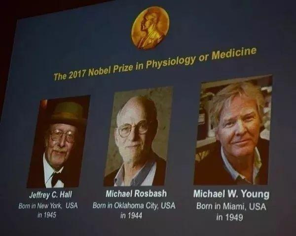 2017年的诺贝尔生理学或医学奖,颁给了3位遗传学家:杰弗理·霍尔、迈克尔·罗斯巴希、迈克尔·杨。