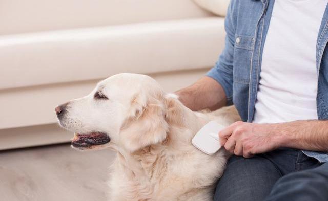 狗狗怎样补钙?如何判断狗狗缺钙?