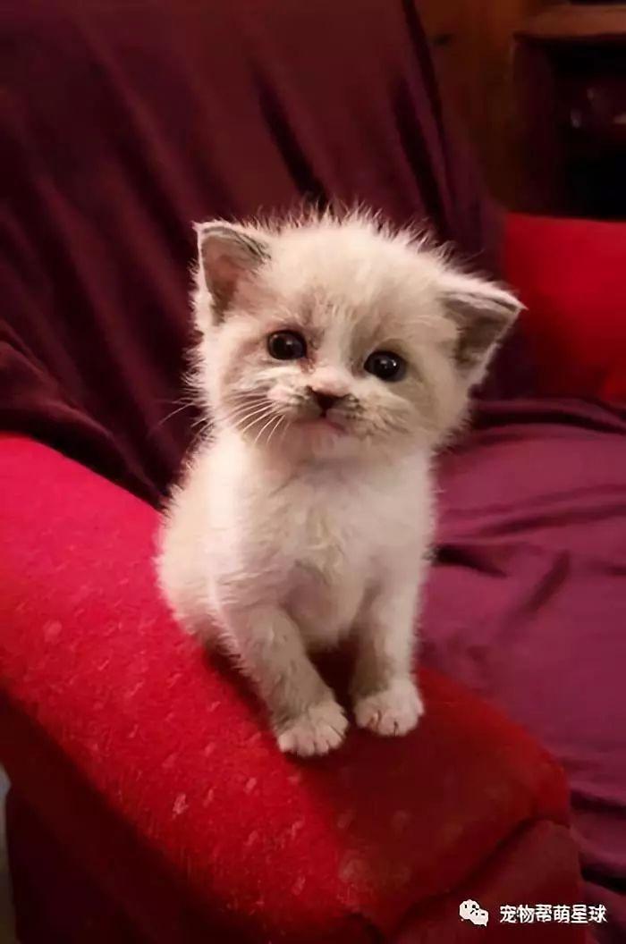 软萌奶猫自我营销!向你发射超甜微笑~
