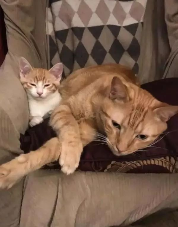 小流浪猫命悬一线,绝望求助木材店,猫咪:铲屎的快来帮帮忙啊