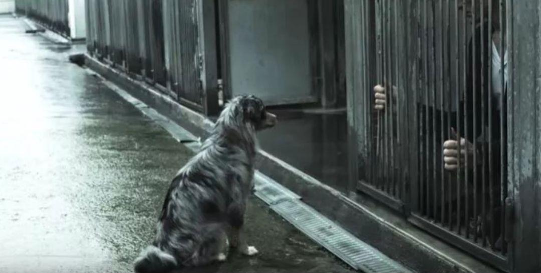 原创 如果有一天,人类被狗遗弃了……