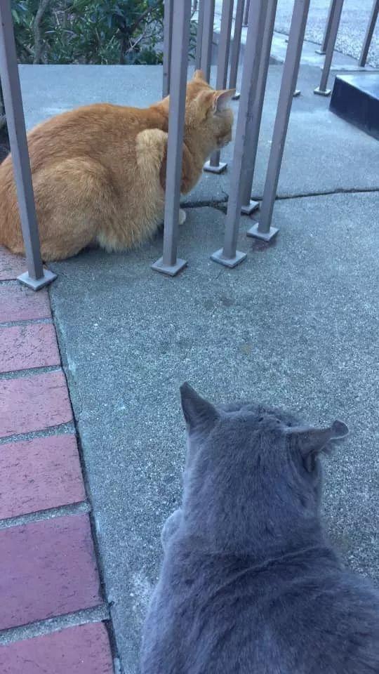 校园的橘猫被喂得太胖,于是有人贴出这样的告示,让人不得不信服!