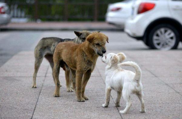 """为什么狗狗总是""""狗仗人势""""?原来是这5个原因,宠主要清楚"""