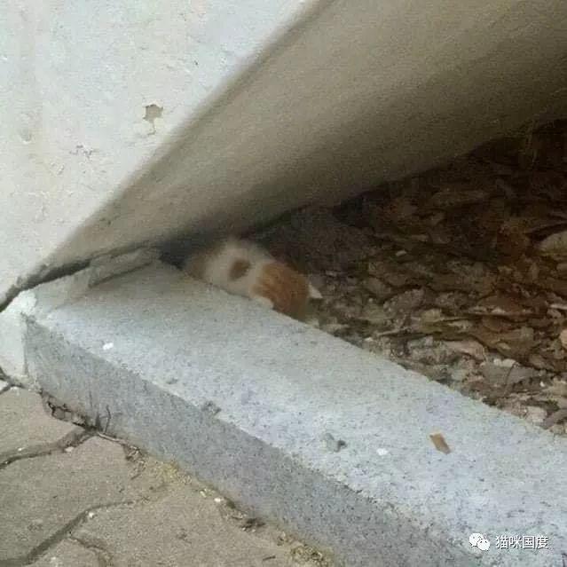 铲屎官路遇一只小猫咪,看着好可怜