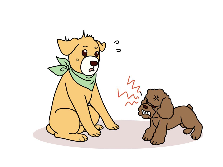狗狗之间怎么样确立地位高低的?是看谁个头大,还是看年龄长?