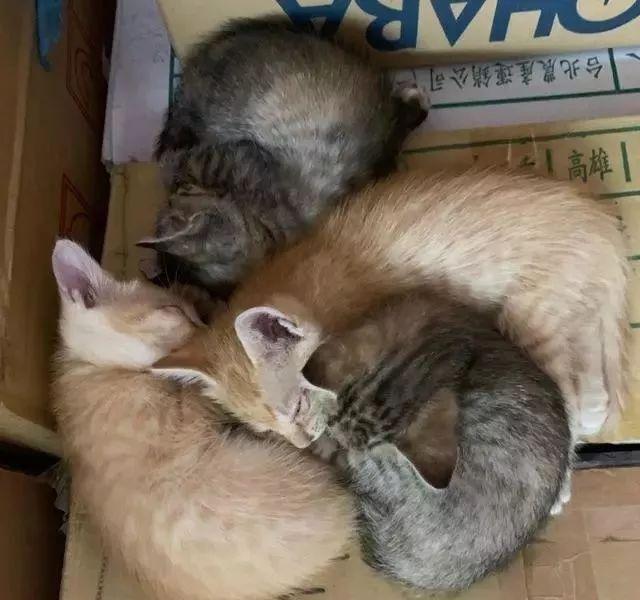 母猫自来闯店里,连叼4小猫进仓库:你要养我们哦