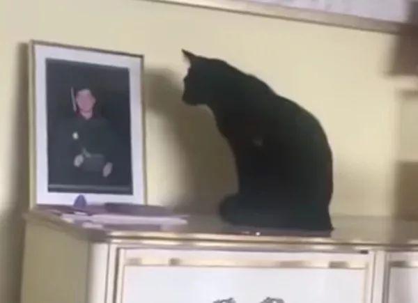 直到猫去世后,我才知道它也爱着我......