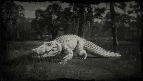 荒野大镖客2传奇鳄鱼什么时候出现鳄鱼触发方法一览