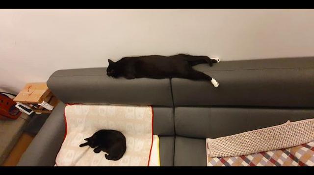 猫咪直接趴在沙发靠垫上睡觉,睡姿也太豪放了,不成精便成人?