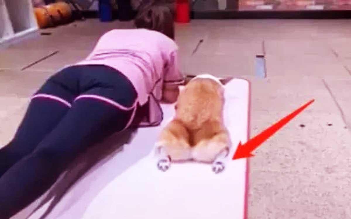 原创 女子做瑜伽,狗狗跟着模仿,当看清狗狗时,女子直接笑出猪叫声!