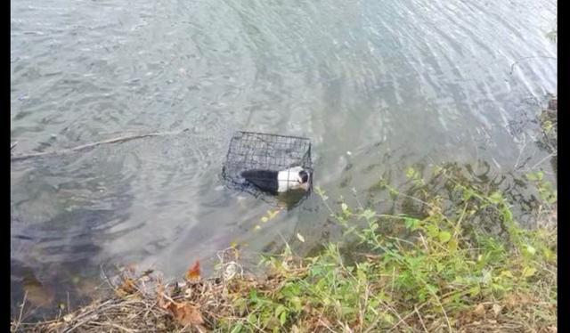 """原创 狗被人""""浸猪笼""""扔进冰冷湖里,满身伤口还在渗血,身体严重失温"""