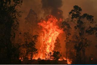 """""""史无前例""""林火肆虐已致3死,澳大利亚总理:会考虑动用军队助灭大火"""