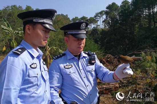 广西崇左民警在中越边境查获野生画眉350只_宁俊宇