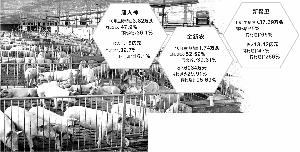 生猪价格大涨 产业链公司10月业绩飘红_销售