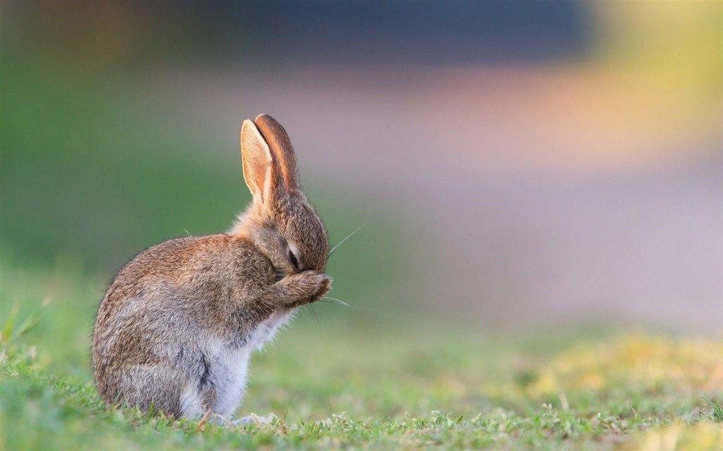 素材公社 图片素材 动物图片 兔子图片 唯美草地可爱兔子