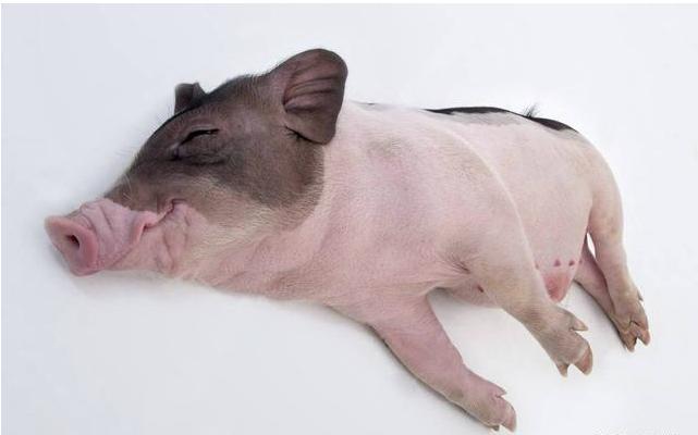 """猪肉一路亮""""绿灯"""",这次大降价,终于能吃得起猪肉了_价格"""