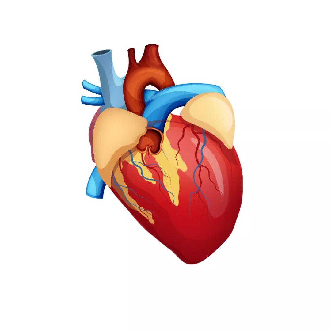 心内科和心外科的区别 什么情况下要做心脏外科手术?